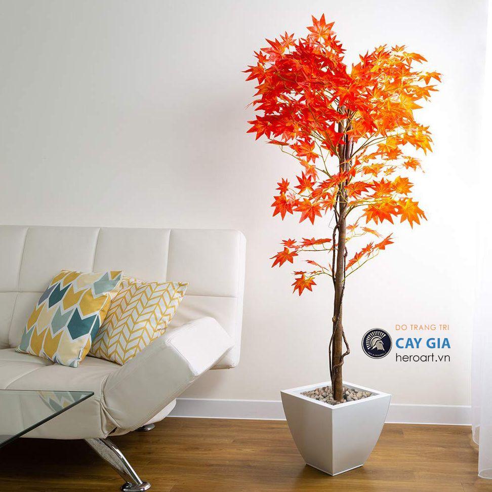 cây phong giả lá đỏ