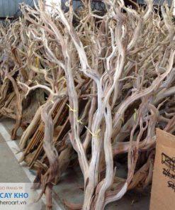 bán cây khô gỗ làm đồ trang trí nhà