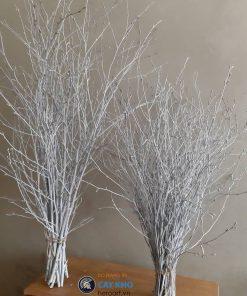 bán bó cây khô sơn trắng