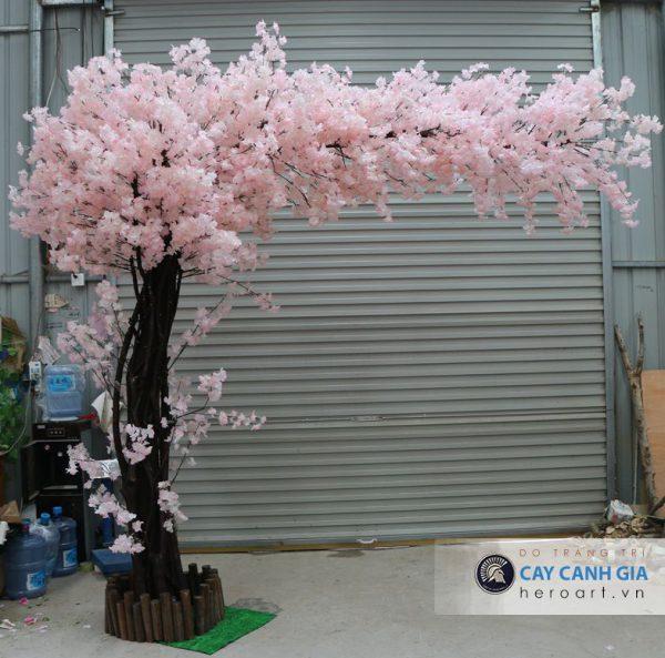 tìm địa điểm bán cây hoa anh đào uy tín tphcm