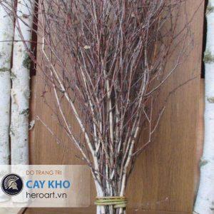 bán cành cây khô trang trí