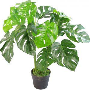 cung cấp cây cảnh giả đẹp, cây monstera lá xẻ