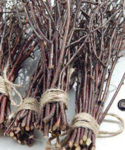 nhánh cây khô làm đồ trang trí