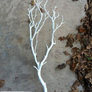 bán cành cây khô sơn trắng trang trí