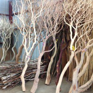 mua cây khô lớn trang trí cửa hàng