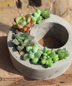 chậu xi măng trồng cây cảnh nhỏ xinh để bàn làm việc