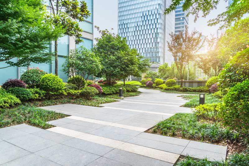 thiết kế cảnh quan sân vườn cây xanh
